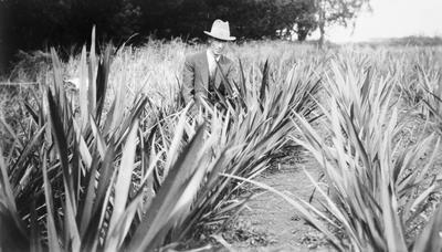 Flax growing - Seifert & Co.