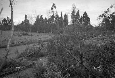 Trees felled by Frankton tornado