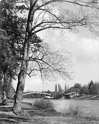 Waikato River from below Parana Park looking towards the Traffic Bridge