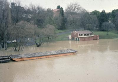 Waikato River in flood