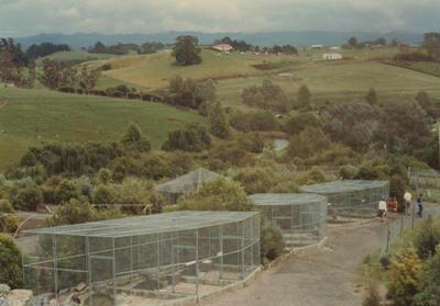 Native wild fowl cages completed and foliage growth