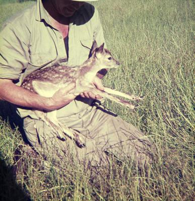 Murray Powell with fawn