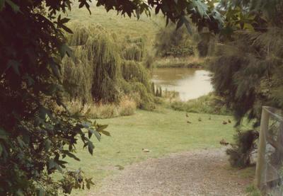 View through foliage to ponds