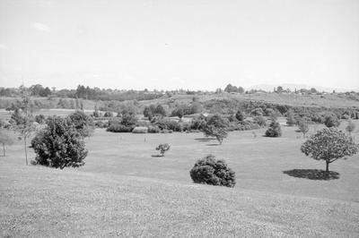 Young trees at Hamilton Gardens