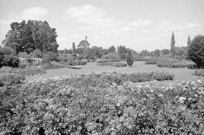 Rogers Rose Garden at Hamilton Gardens