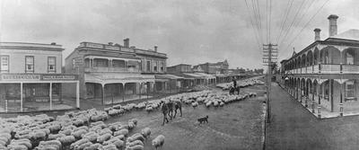Sheep being driven along Victoria Street