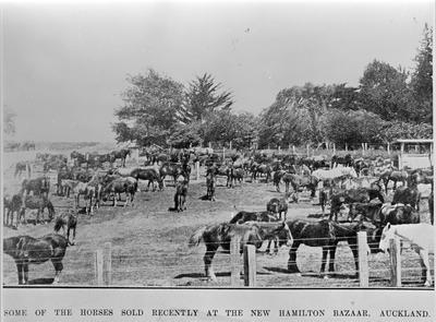 Horse sales at the Hamilton Horse Bazaar