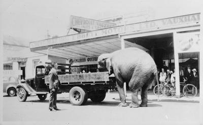 Elephant climbing onto truck