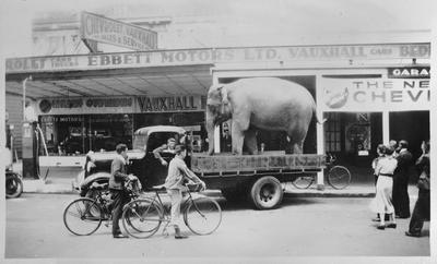 Elephant on Hood Street