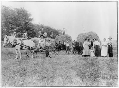 Haymaking at Waihou
