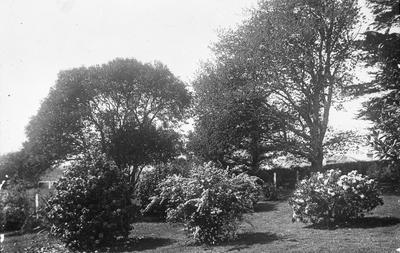 Waratah grounds