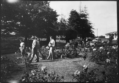 Rose Garden at Hamilton Lake