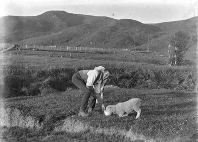 Farmer feeds older lamb.