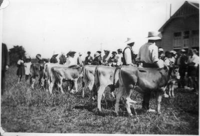 Orini School Calf Club Day 1938