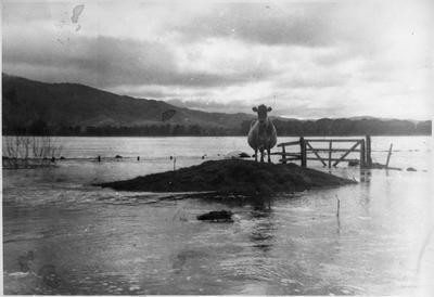 Flood run-off