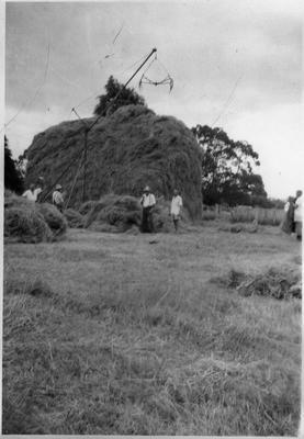 Stacking hay at Houghton's Farm