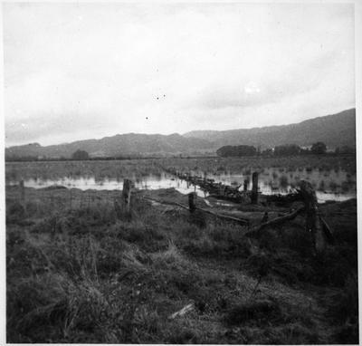 Orini - peat swamp
