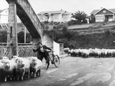 Driving sheep across Fairfield Bridge