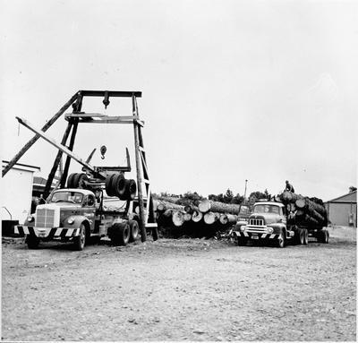 Logging trucks at Ellis & Burnand Ltd.'s Putaruru mill