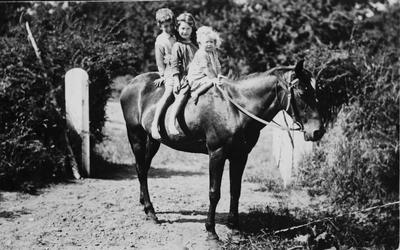 Raynes children on a horse