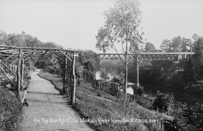 Waikato River bank