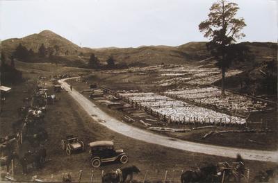 Waingaro saleyards, 1917