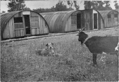 Goat and dog outside Nissin huts