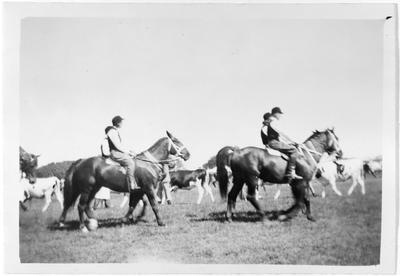 Horses etc. Waikato A & P Show, Hamilton