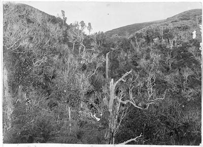 Pukekowa falls, Raglan County