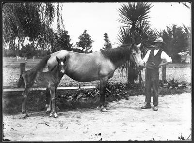 Man holding mare and foal - Hamilton