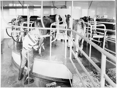 No. 1 Dairy