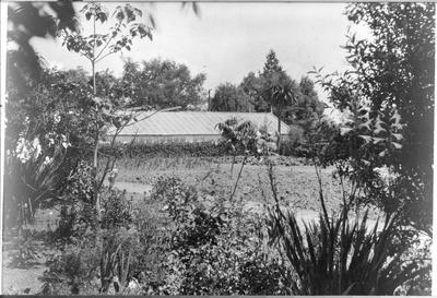 Amos Coxhead gardens, Ruakura