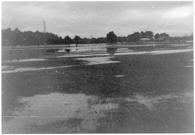 Homestead - flood