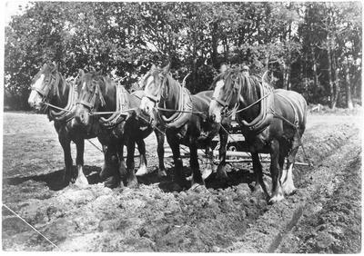 Four-horse team