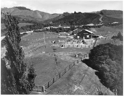 Whatawhata Hill farm