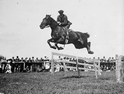 Show jumping at Claudelands Showgrounds