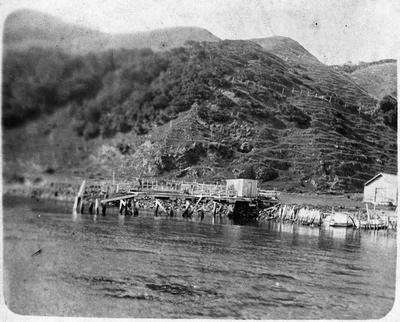 Jetty at Port Waikato