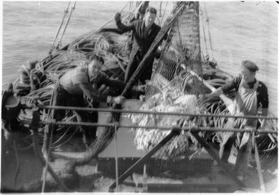 Seine Net landing fish, Port Waikato, West Coast