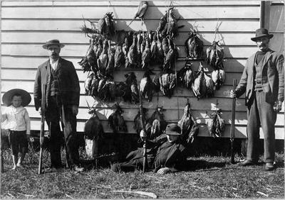 Duck shooters standing by shed c 1910 (year and location unknown)