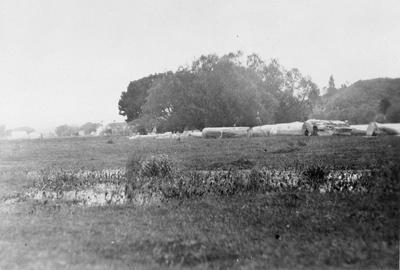 Logs in field