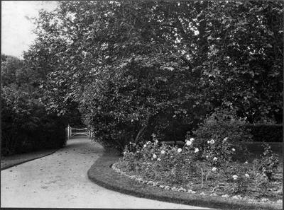 Bankwood Homestead - driveway and garden
