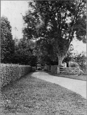 Bankwood Homestead - driveway