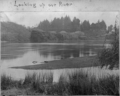 Waikato River - view from Bankwood