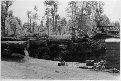Ellis and Burnand bushworkings - tractor