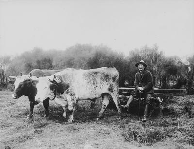 Man and bullocks and cart