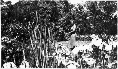 """""""Te Whare"""" - garden, 1939"""
