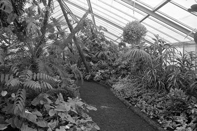 Hamilton Gardens display glasshouse