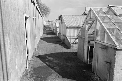 Glasshouses and sheds at the Council Nursery