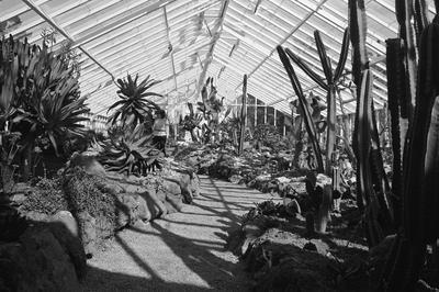 The cactus house at Hamilton Gardens