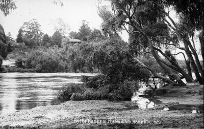 On the banks of the Waikato, Hamilton